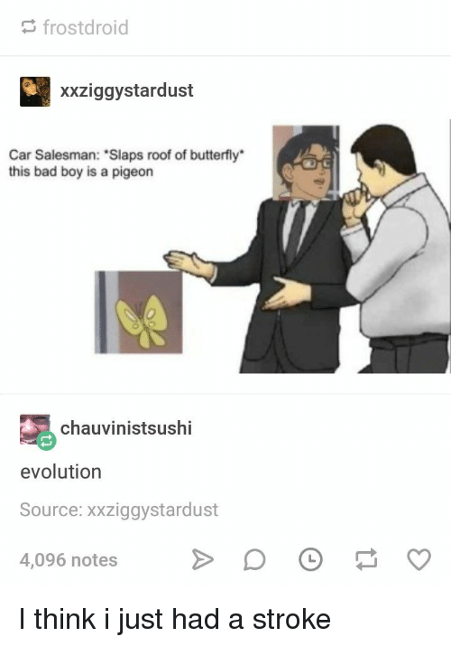 "Bad, Butterfly, and Evolution: frostdroid  xxziggystardust  Car Salesman: ""Slaps roof of butterfly*  this bad boy is a pigeon  chauvinistsushi  evolution  Source: xxziggystardust  4,096 notes I think i just had a stroke"