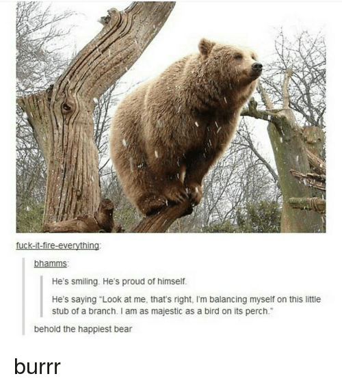 "Majesticity: fuck-it-fire-everything  bhamms  He's smiling. He's proud of himself.  He's saying ""Look at me, that's right, l'm balancing myself on this little  stub of a branch. am as majestic as a bird on its perch  behold the happiest bear burrr"