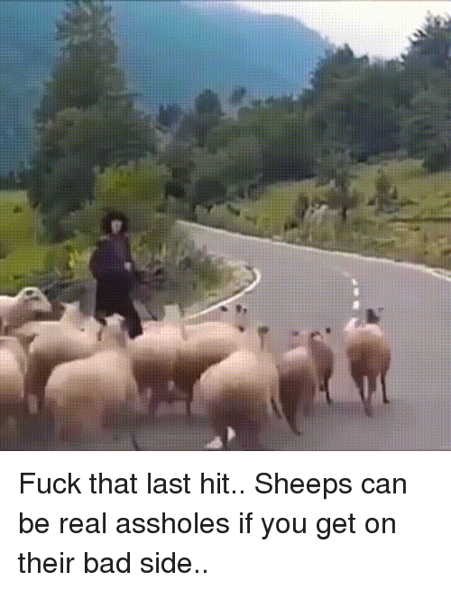 sheeps: Fuck that last hit.. Sheeps can be real assholes if you get on their bad side..