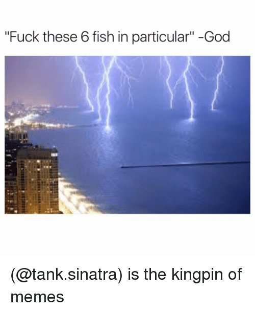 """kingpin: """"Fuck these 6 fish in particular"""" -God (@tank.sinatra) is the kingpin of memes"""