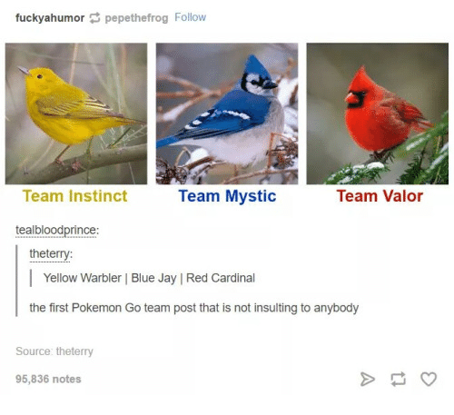 Blue Jays: fuckyahumor pepethefrog Follow  Team Valor  Team Instinct  Team Mystic  teal bloodprince  the terry:  Yellow Warbler Blue Jay IRed Cardinal  the first Pokemon Go team post that is not insulting to anybody  Source the terry  95,836 notes