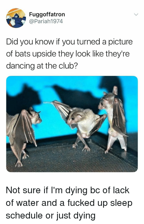 Club, Dancing, and Schedule: Fuggoffatron  @Pariah1974  Did you know if you turned a picture  of bats upside they look like they're  dancing at the club? Not sure if I'm dying bc of lack of water and a fucked up sleep schedule or just dying