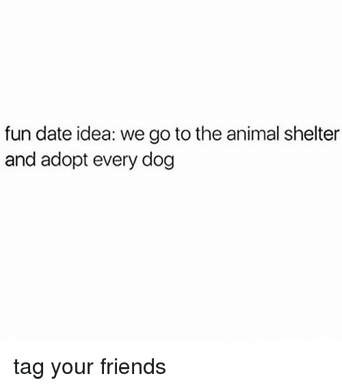 dog tags: fun date idea: we go to the animal shelter  and adopt every dog tag your friends