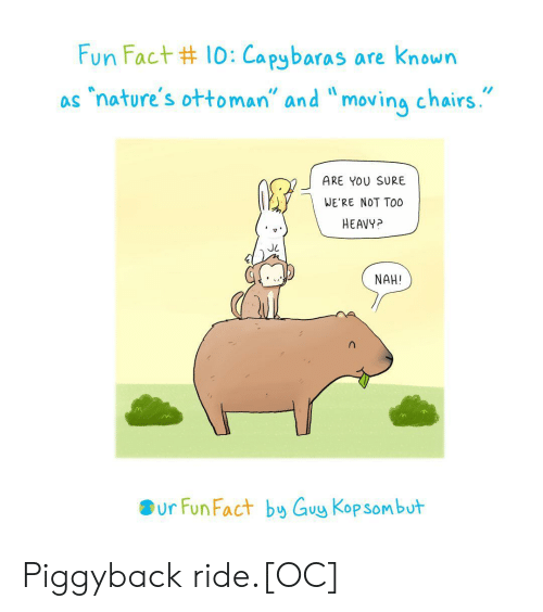 "chairs: Fun Fact #10:Capybaras are known  ""nature's ottoman"" and ""moving chairs.  as  ARE YOU SURE  WE'RE NOT TO0  HEAVY?  NAH!  ur Fun Fact by Guy Kop sombut Piggyback ride.[OC]"