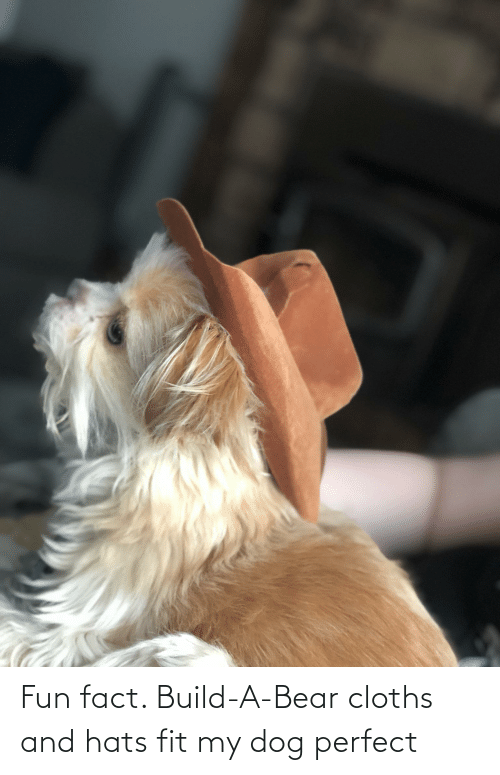 cloths: Fun fact. Build-A-Bear cloths and hats fit my dog perfect