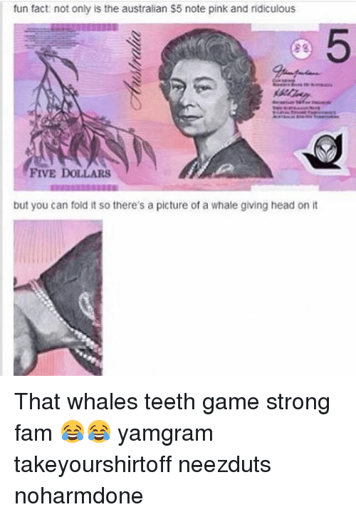 give head: fun fact: not only is the australian $5 note pink and ridiculous  FIVE  but you can fold it so there's a picture of a whale giving head on it That whales teeth game strong fam 😂😂 yamgram takeyourshirtoff neezduts noharmdone