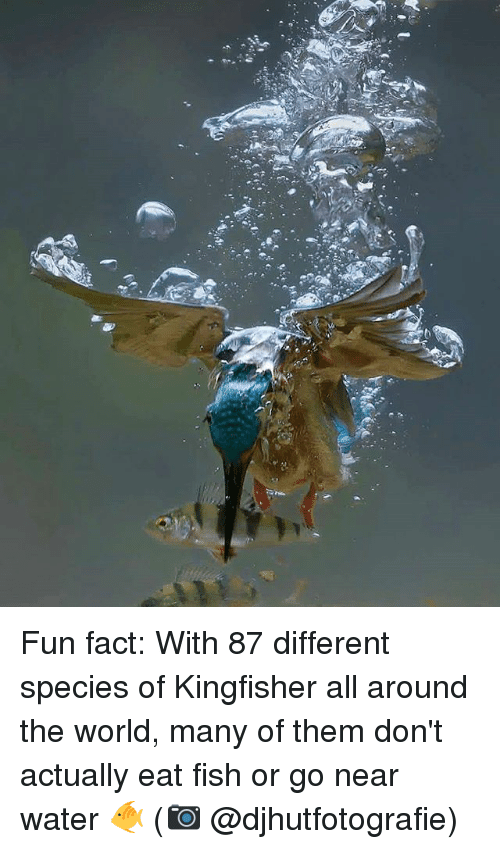 25 best memes about fun facts fun facts memes for Where can i go fishing near me
