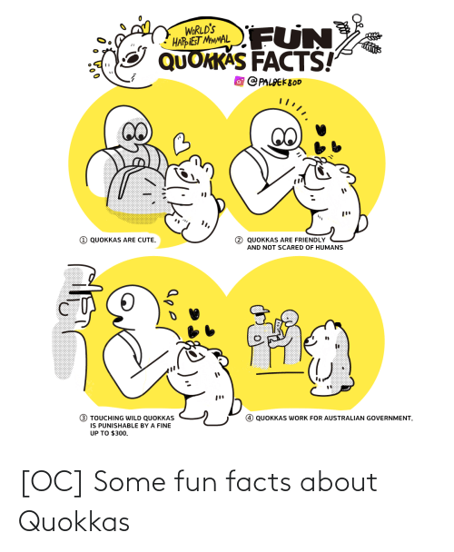 touching: FUN  WORLD'S  HARIEST MMMAL  QUOKKAS FACTS!  O PALPEK800  1 QUOKKAS ARE CUTE.  2 QUOKKAS ARE FRIENDLY  AND NOT SCARED OF HUMANS  (!)  3 TOUCHING WILD QUOKKAS  IS PUNISHABLE BY A FINE  UP TO $300.  QUOKKAS WORK FOR AUSTRALIAN GOVERNMENT. [OC] Some fun facts about Quokkas