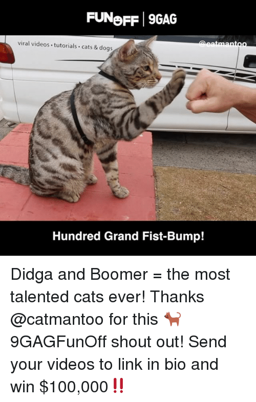 9gag, Anaconda, and Cats: FUNeFF 9GAG  viral videos tutorials cats & dogs  Hundred Grand Fist-Bump! Didga and Boomer = the most talented cats ever! Thanks @catmantoo for this 🐈 9GAGFunOff shout out! Send your videos to link in bio and win $100,000‼️