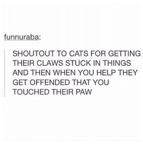 Pawing: funnuraba:  SHOUTOUT TO CATS FOR GETTING  THEIR CLAWS STUCK IN THINGS  AND THEN WHEN YOU HELP THEY  GET OFFENDED THAT YOU  TOUCHED THEIR PAW