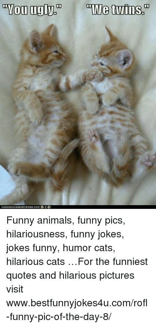Jokes: Funny animals, funny pics, hilariousness, funny jokes, jokes funny, humor cats, hilarious cats …For the funniest quotes and hilarious pictures visit www.bestfunnyjokes4u.com/rofl-funny-pic-of-the-day-8/