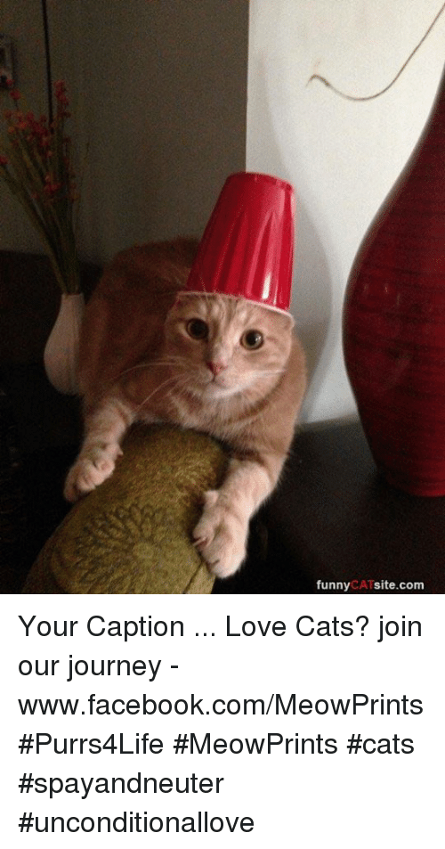 Dating site loves cats
