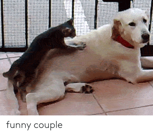 Funny Couple: funny couple