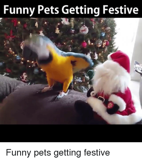 Memes, Festival, and 🤖: Funny Pets Getting Festive Funny pets getting festive