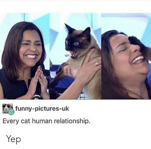 funny pictures: funny-pictures-uk  Every cat human relationship. Yep