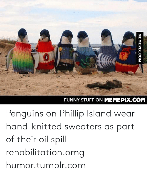 oil spill: FUNNY STUFF ON MEMEPIX.COM  МЕМЕРIХ.Сом Penguins on Phillip Island wear hand-knitted sweaters as part of their oil spill rehabilitation.omg-humor.tumblr.com