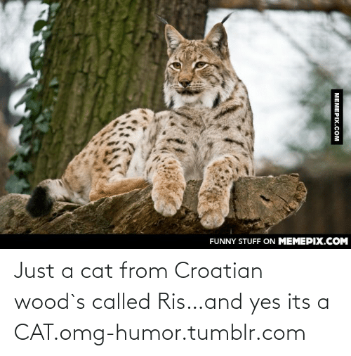 Croatian: FUNNY STUFF ON MEMEPIX.COM  MEMEPIX.COM Just a cat from Croatian wood`s called Ris…and yes its a CAT.omg-humor.tumblr.com