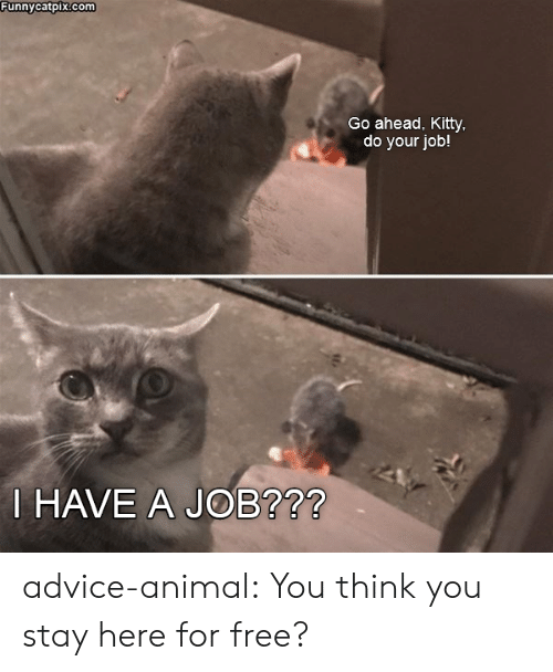 do your job: Funnycatpix.com  Go ahead, Kitty  do your job!  HAVE A JOB?72 advice-animal:  You think you stay here for free?