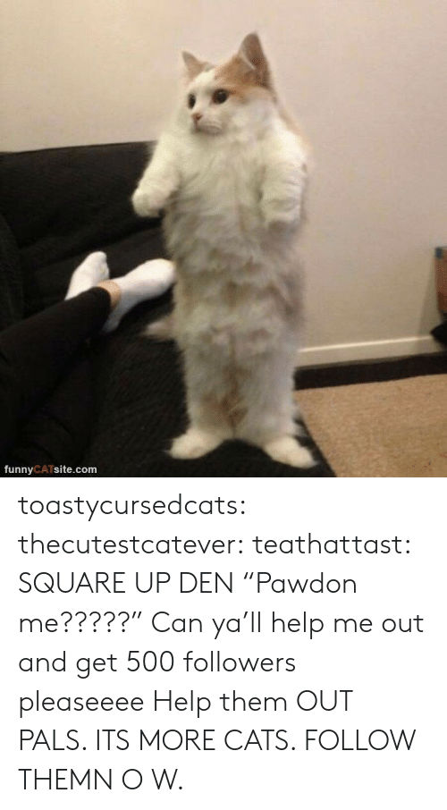 "pals: funnyCATsite.com toastycursedcats:  thecutestcatever:  teathattast: SQUARE UP DEN ""Pawdon me?????""  Can ya'll help me out and get 500 followers pleaseeee   Help them OUT PALS. ITS MORE CATS. FOLLOW THEMN O W."