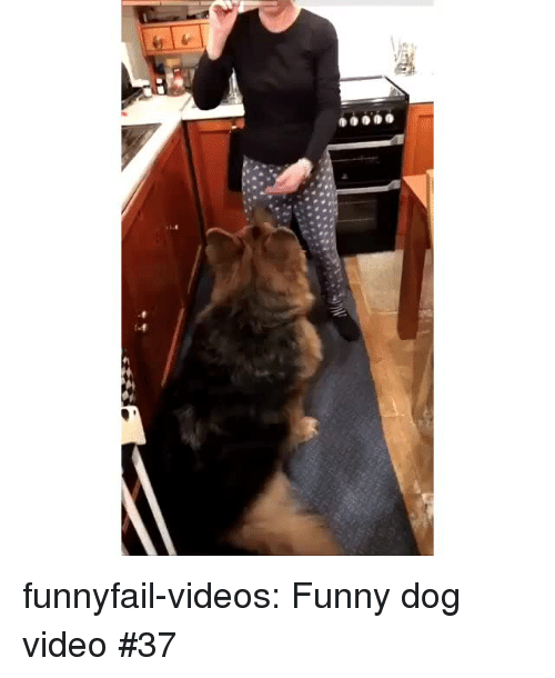 xyz: funnyfail-videos:  Funny dog video #37