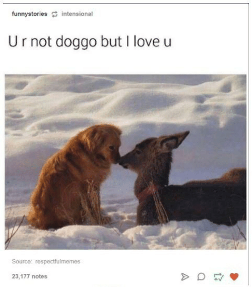 Love, Humans of Tumblr, and Doggo: funnystories intensional  Ur not doggo but I love u  Source: respectfulmemes  23,177 notes