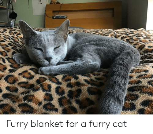 blanket: Furry blanket for a furry cat