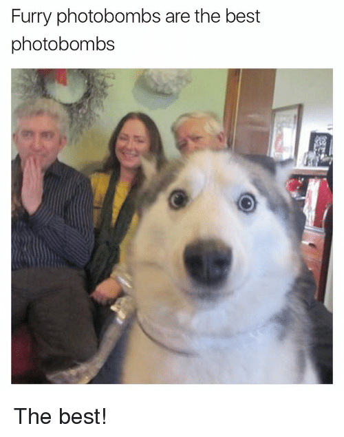 Funny, Photobomb, and Photobombing: Furry photobombs are the best  photobombs The best!