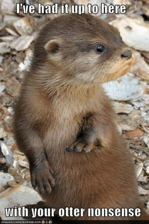 otter nonsense: Fve had it up to here  with your otter nonsense  ICANHASCHEEZBURGER.OOM