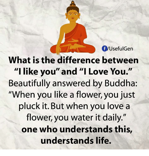 """Memes, I Love You, and Buddha: fyUsefulGen  What is the difference between  """"I like  you"""" and """"I Love You  Beautifully answered by Buddha:  """"When you like a flower, you just  pluck it. But when you love a  flower, you water it daily.""""  one who understands this,  understands life."""