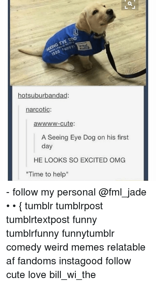 "Ironic: G EYE DOG  otsuburbandad  narcotic  awwww-cute:  A Seeing Eye Dog on his first  day  HE LOOKS SO EXCITED OMG  ""Time to help"" - follow my personal @fml_jade • • { tumblr tumblrpost tumblrtextpost funny tumblrfunny funnytumblr comedy weird memes relatable af fandoms instagood follow cute love bill_wi_the"