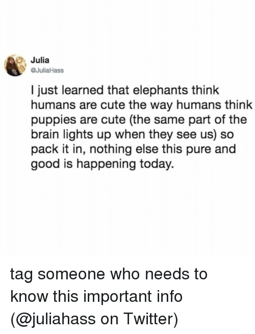 Cute, Memes, and Puppies: g Julia  08  @JuliaHass  l just learned that elephants think  humans are cute the way humans think  puppies are cute (the same part of the  brain lights up when they see us) so  pack it in, nothing else this pure and  good is happening today. tag someone who needs to know this important info (@juliahass on Twitter)