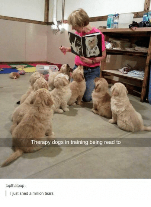 Dogs, Humans of Tumblr, and Dog: G000  DOG  Therapy dogs in training being read to  toptha  I just shed a million tears.