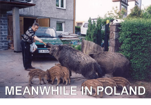 ga 006 meanwhile in poland 28616651 🅱 25 best memes about meanwhile in poland meanwhile in
