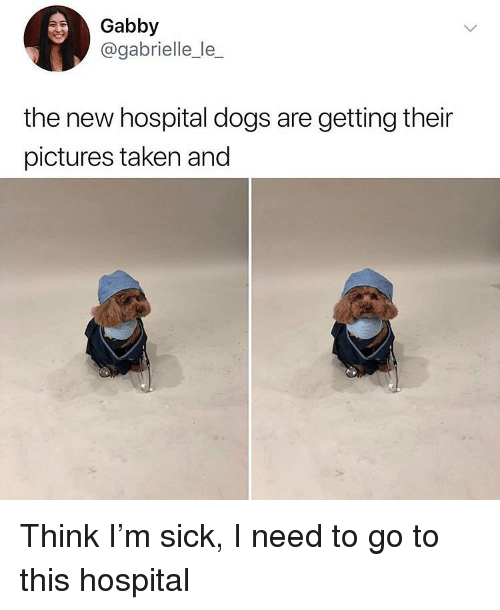 gabrielle: Gabby  @gabrielle_le_  the new hospital dogs are getting their  pictures taken and Think I'm sick, I need to go to this hospital