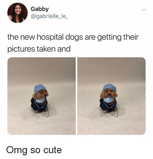 gabrielle: Gabby  @gabrielle_le_  the new hospital dogs are getting their  pictures taken and Omg so cute