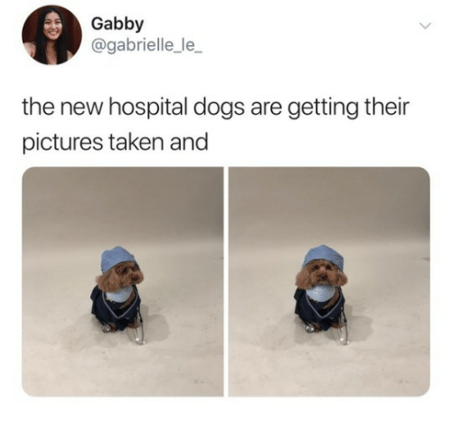 gabrielle: Gabby  @gabrielle_le_  the new hospital dogs are getting their  pictures taken and