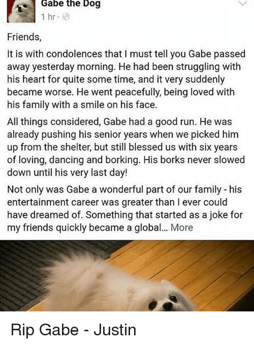 Gabe: Gabe the Dog  1 hr  Friends,  It is with condolences that I must tell you Gabe passed  away yesterday morning. He had been struggling with  his heart for quite some time, and it very suddenly  became worse. He went peacefully, being loved with  his family with a smile on his face.  All things considered, Gabe had a good run. He was  already pushing his senior years when we picked him  up from the shelter, but still blessed us with six years  of loving, dancing and borking. His borks never slowed  down until his very last day!  Not only was Gabe a wonderful part of our family his  entertainment career was greater than l ever could  have dreamed of. Something that started as a joke for  my friends quickly became a global... More Rip Gabe - Justin