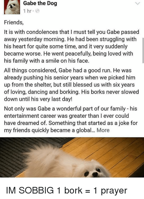 Gabe: Gabe the Dog  1 hr  Friends,  It is with condolences that l must tell you Gabe passed  away yesterday morning. He had been struggling with  his heart for quite some time, and it very suddenly  became worse. He went peacefully, being loved with  his family with a smile on his face.  All things considered, Gabe had a good run. He was  already pushing his senior years when we picked him  up from the shelter, but still blessed us with six years  of loving, dancing and borking. His borks never slowed  down until his very last day!  Not only was Gabe a wonderful part of our family his  entertainment career was greater than l ever could  have dreamed of. Something that started as a joke for  my friends quickly became a global... More IM SOBBIG 1 bork = 1 prayer