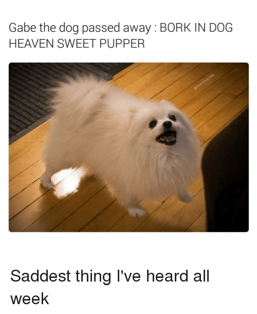 Gabe: Gabe the dog passed away BORK IN DOG  HEAVEN SWEET PUPPER Saddest thing I've heard all week