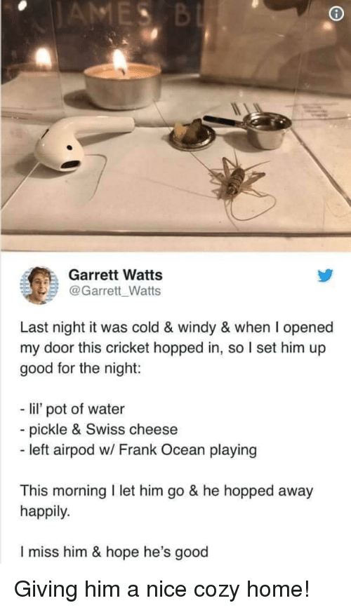 Frank Ocean: Garrett Watts  @Garrett Watts  Last night it was cold & windy & when I opened  my door this cricket hopped in, so I set him up  good for the night:  - li pot of water  - pickle & Swiss cheese  - left airpod w/ Frank Ocean playing  This morning I let him go & he hopped away  happily.  I miss him & hope he's good Giving him a nice cozy home!