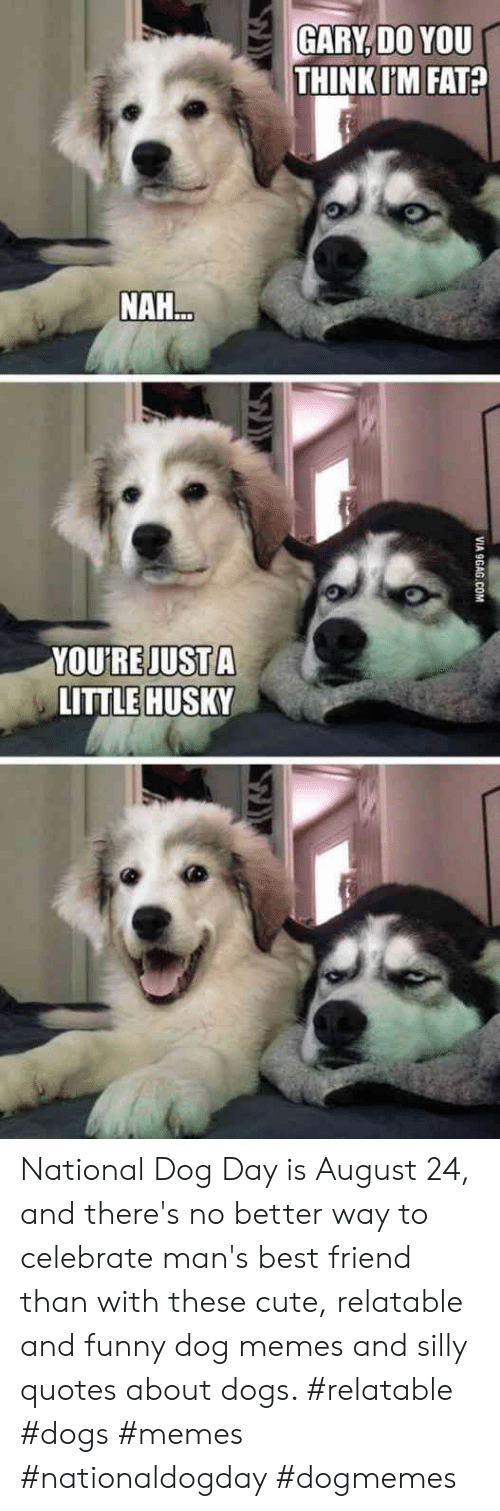 Silly Quotes: GARY,DO YOU  THINK IM FAT?  NAH...  YOURE JUST A  LITTLE HUSKY  VIA 9GAG COM National Dog Day is August 24, and there's no better way to celebrate man's best friend than with these cute, relatable and funny dog memes and silly quotes about dogs.  #relatable #dogs #memes #nationaldogday #dogmemes