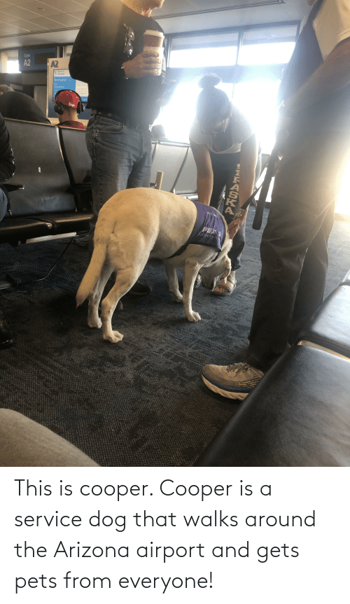 Bad, Arizona, and Pets: Gate  A2  A2  Omaha  யிமு 4  bad wihe  gsaled  1005 AM MST  het e or  o tes  deure  HEAR  PET ME  PEX  NAVIGATOR BN  PASAALAA This is cooper. Cooper is a service dog that walks around the Arizona airport and gets pets from everyone!