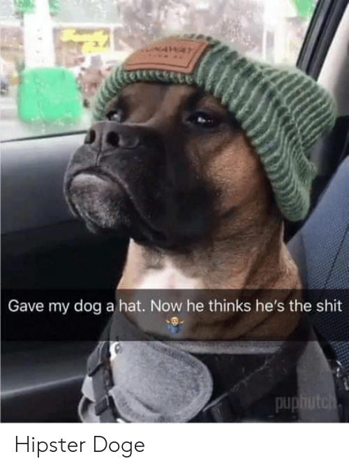 Hipster: Gave my dog a hat. Now he thinks he's the shit  pu Hipster Doge