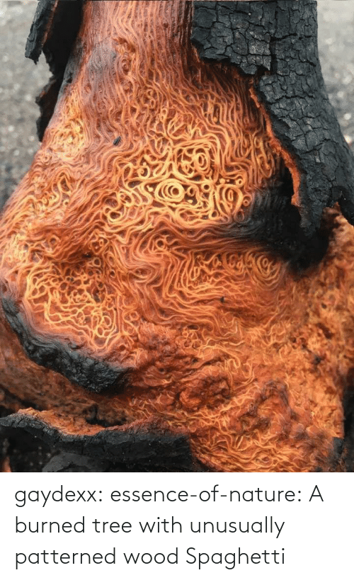 Tree: gaydexx: essence-of-nature:   A burned tree with unusually patterned wood    Spaghetti