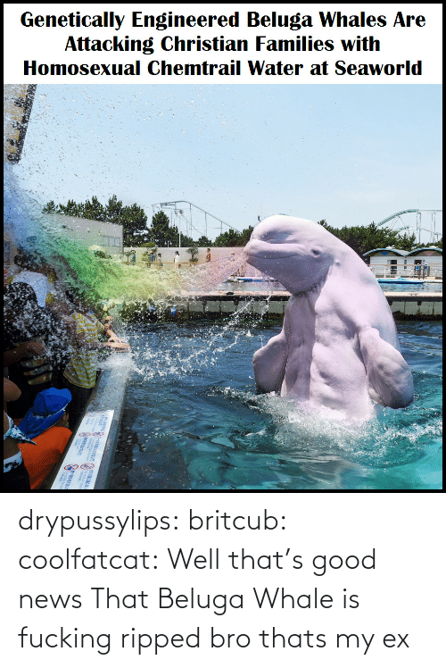 Engineered: Genetically Engineered Beluga Whales Are  Attacking Christian Families with  Homosexual Chemtrail Water at Seaworld drypussylips:  britcub:  coolfatcat:  Well that's good news  That Beluga Whale is fucking ripped bro  thats my ex