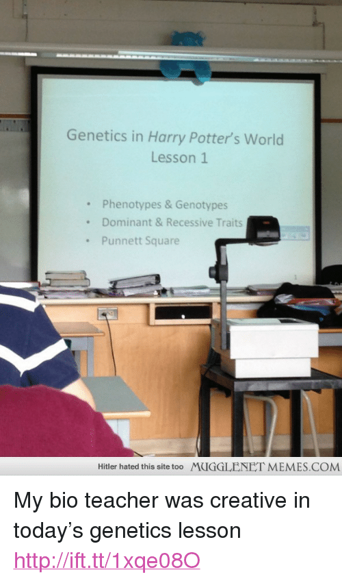 """memes: Genetics in Harry Potter's World  Lesson 1  . Phenotypes &Genotypes  .Dominant & Recessive Traits  Punnett Square  Hitler hated this site too  MUGGLENET MEMES.COM <p>My bio teacher was creative in today&rsquo;s genetics lesson <a href=""""http://ift.tt/1xqe08O"""">http://ift.tt/1xqe08O</a></p>"""