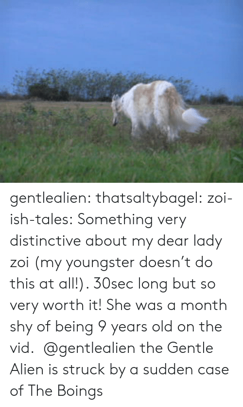 vid: gentlealien: thatsaltybagel:  zoi-ish-tales:  Something very distinctive about my dear lady zoi (my youngster doesn't do this at all!). 30sec long but so very worth it! She was a month shy of being 9 years old on the vid.    @gentlealien   the Gentle Alien is struck by a sudden case of The Boings