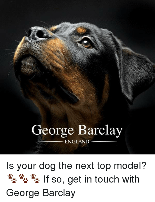 next top model: George Barclay  ENGLAND Is your dog the next top model? 🐾🐾🐾  If so, get in touch with George Barclay