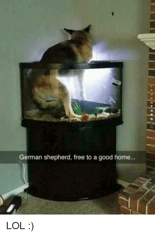 Why You Shouldn T Give Dogs Away For Free