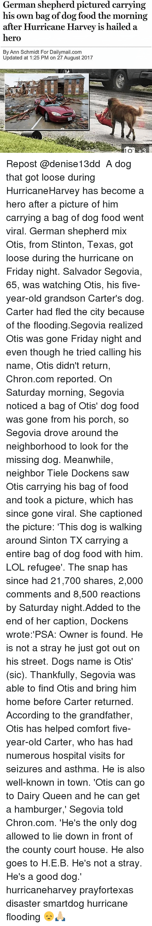 Sawing: German shepherd pictured carrying  his own bag of dog food the morning  after Hurricane Harvev is hailed a  hero  By Ann Schmidt For Dailymail.com  Updated at 1:25 PM on 27 August 2017  80  8 Repost @denise13dd ・・・ A dog that got loose during HurricaneHarvey has become a hero after a picture of him carrying a bag of dog food went viral. German shepherd mix Otis, from Stinton, Texas, got loose during the hurricane on Friday night. Salvador Segovia, 65, was watching Otis, his five-year-old grandson Carter's dog. Carter had fled the city because of the flooding.Segovia realized Otis was gone Friday night and even though he tried calling his name, Otis didn't return, Chron.com reported. On Saturday morning, Segovia noticed a bag of Otis' dog food was gone from his porch, so Segovia drove around the neighborhood to look for the missing dog. Meanwhile, neighbor Tiele Dockens saw Otis carrying his bag of food and took a picture, which has since gone viral. She captioned the picture: 'This dog is walking around Sinton TX carrying a entire bag of dog food with him. LOL refugee'. The snap has since had 21,700 shares, 2,000 comments and 8,500 reactions by Saturday night.Added to the end of her caption, Dockens wrote:'PSA: Owner is found. He is not a stray he just got out on his street. Dogs name is Otis' (sic). Thankfully, Segovia was able to find Otis and bring him home before Carter returned. According to the grandfather, Otis has helped comfort five-year-old Carter, who has had numerous hospital visits for seizures and asthma. He is also well-known in town. 'Otis can go to Dairy Queen and he can get a hamburger,' Segovia told Chron.com. 'He's the only dog allowed to lie down in front of the county court house. He also goes to H.E.B. He's not a stray. He's a good dog.' hurricaneharvey prayfortexas disaster smartdog hurricane flooding 😞🙏🏼
